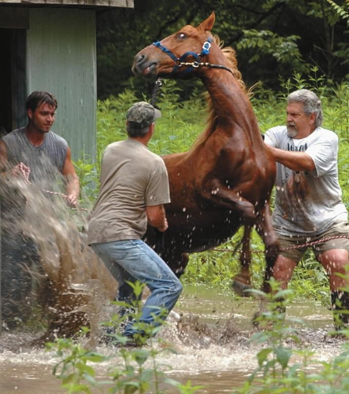 Резултат с изображение за SCARED HORSE