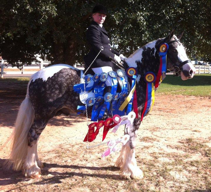 Rick S Random Horse Thoughts Think Like A Horse