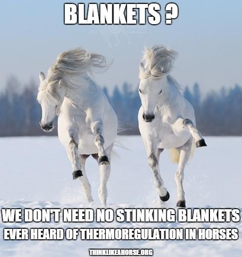 Horse Health And Medical Think Like A Rick Gore Horsemanship R