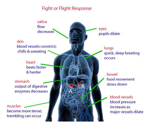 Image result for fight flight freeze response