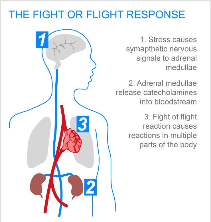 Understanding The Flight Or Fight Response